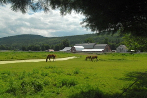 Horses at Riverbend Farm